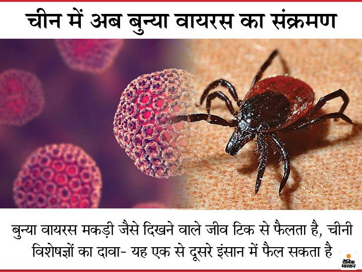 मकड़ी जैसे दिखने वाले जीव से फैला बुन्या वायरस, चीन में अब तक 60 लोग संक्रमित, 7 की मौत; मरीजों में बुखार-खांसी जैसे लक्षण लाइफ & साइंस,Happy Life - Dainik Bhaskar