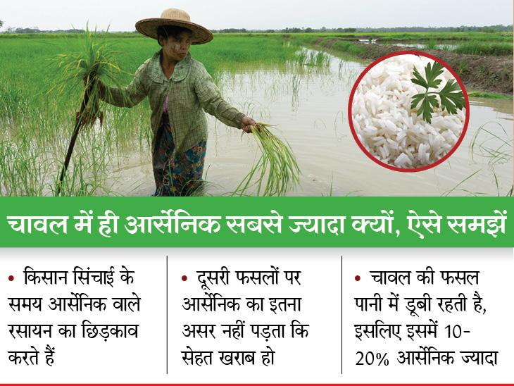 चावल अधिक खाने से मौत का खतरा ज्यादा, इसमें मौजूद आर्सेनिक हृदय रोगों की वजह बनता है; बिहार और उत्तर प्रदेश के लोगों को अलर्ट रहने की जरूरत लाइफ & साइंस,Happy Life - Dainik Bhaskar