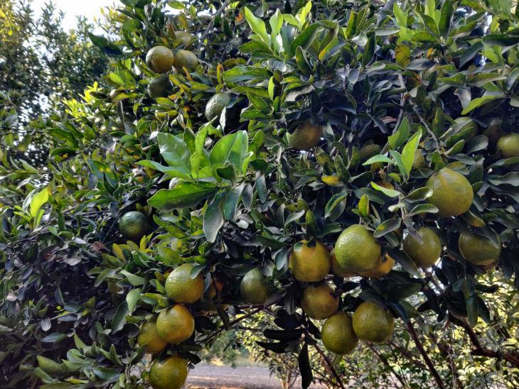 तथागत फल और सब्जियां भी उगाते हैं। उनका कहना है कि वे एक आम परिवार के किचन की हर जरूरत को पूरा करना चाहते हैं।
