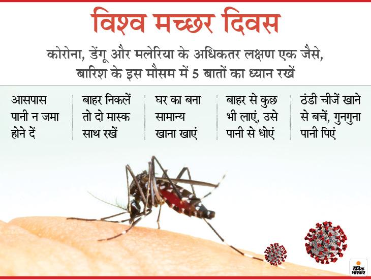 मच्छर के काटने पर होने वाली बीमारी और कोरोना संक्रमण के लक्षण एक जैसे, मानसून में खतरा सबसे ज्यादा, एक्सपर्ट से समझें कैसे अलर्ट रहे|लाइफ & साइंस,Happy Life - Dainik Bhaskar