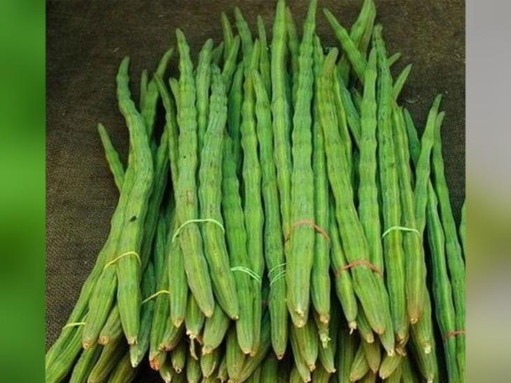 सहजन को किचन गार्डन में भी आसानी से उगाया जा सकता है।