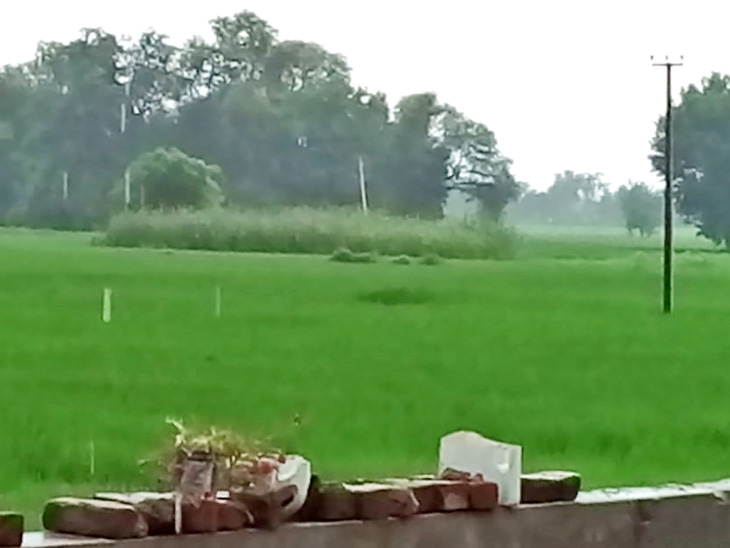Cultivation from paddy to wheat is done here. This time everything was destroyed due to lockdown.