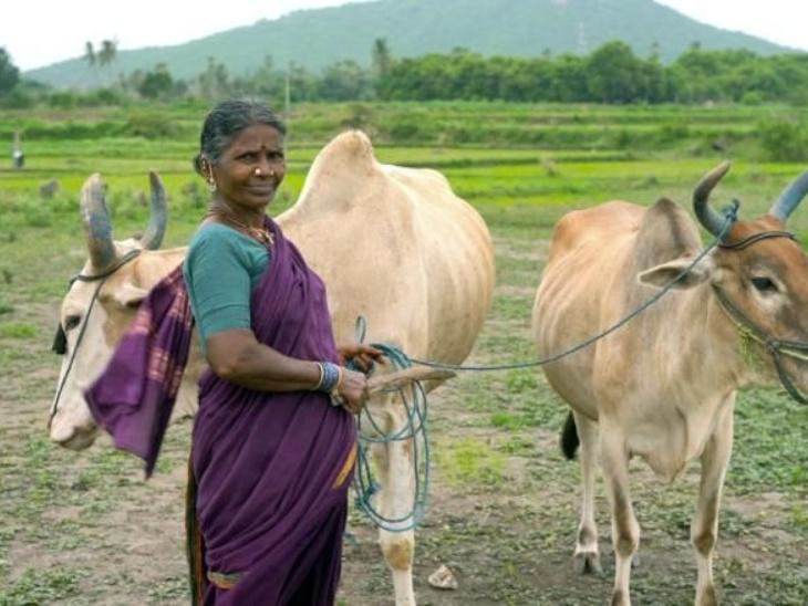 Mirkuri Gangwa, a 58-year-old You Tube sensation from Telangana, used to run the family's expenses by working in fields and making bidis. | तेलंगाना की 58 वर्षीय मिरकुरी गंगवा बनीं यू ट्यूब सेंसेशन, कभी खेतों में काम करके और बीड़ी बनाकर चलाती थीं परिवार का खर्च