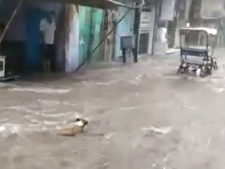 Dogs were seen drifting in the flow of water.