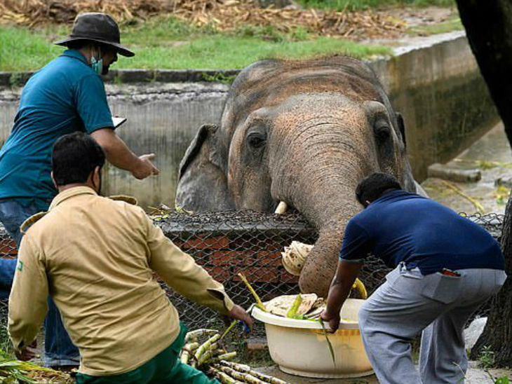Local officials along with 'Four Poses' staff feeding the elephants.