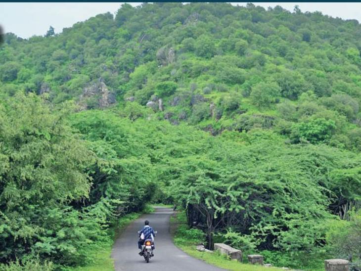 मध्यप्रदेश के धार में बदनावर कस्बे से 8 किमी दूर बड़ाछ गांव के बाहर पहाड़ों के बीच हरियाली। - Dainik Bhaskar