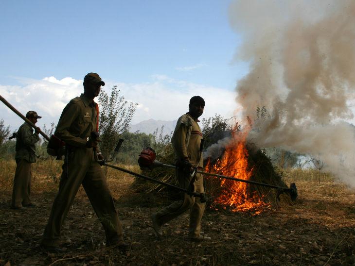 नशे की फसल को जलाती हुई पुलिस। एक रिपोर्ट के मुताबिक, जम्मू-कश्मीर की कुल आबादी में से 4.9% लोग नशीले पदार्थों का सेवन करते हैं।