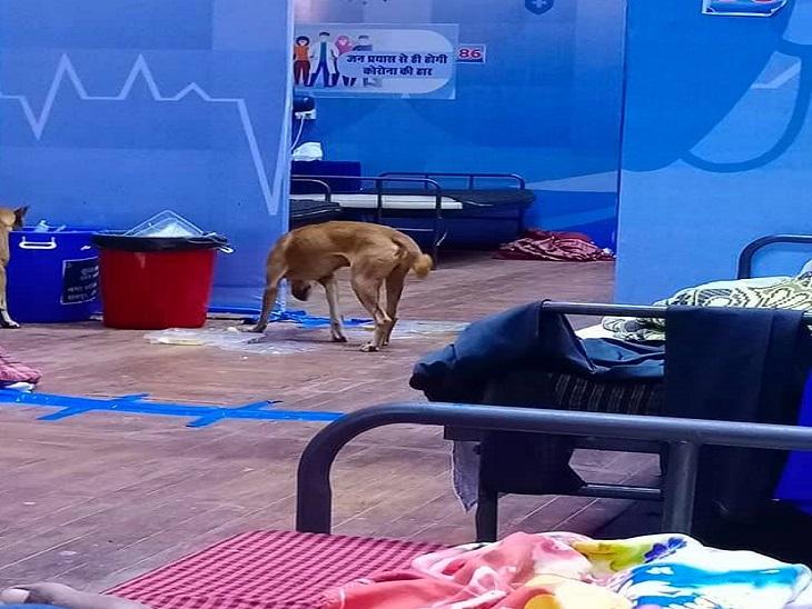 फोटो रायपुर के इंडोर स्टेडियम की है, तस्वीर में नीले डस्टबिन की तरफ ध्यान देंगे तो दूसरा कुत्ता भी दिखेगा, बेड पर लेटे हुए एक मरीज से इस तस्वीर क्लिक किया है।