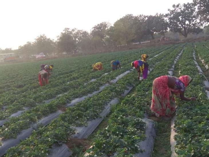 दीपक के इस काम से 60 से ज्यादा लोगों को रोजगार मिला है। इसमें बड़ी संख्या में महिलाएं भी शामिल हैं।