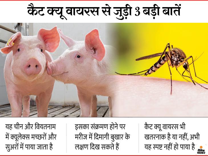 चीन में पाया जाने वाला 'कैट क्यू वायरस' भारत में संक्रमण फैला सकता है, 883 में से सिर्फ दो भारतीयों में मिली इसके खिलाफ एंटीबॉडीज|लाइफ & साइंस,Happy Life - Dainik Bhaskar