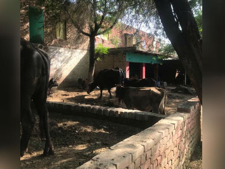 तस्वीर आरोपियों के घर की है। इनका घर पीड़ित के घर के सामने ही है, बीच में बस एक छोटा तालाब है।