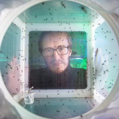 डेंगू पर रिसर्च के लिए रोजाना 5 हजार मच्छरों से खुद को कटवाते हैं ऑस्ट्रेलियाई वैज्ञानिक पेरन, दावा- ये मच्छर डेंगू रोकेंगे इसलिए फीडिंग कराकर इनकी संख्या बढ़ा रहे