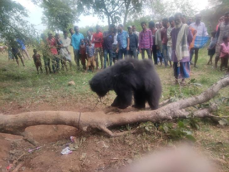 ग्रामीण काफी देर तक भालू के मालिक की खोजबीन की मगर सोमवार शाम तक कोई नहीं आया।