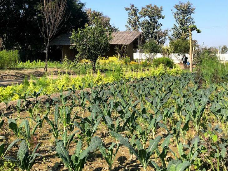 नेहा ने 2017 में ऑर्गेनिक फार्मिंग की शुरुआत की थी, आज वो 16 एकड़ जमीन पर खेती कर रही हैं।
