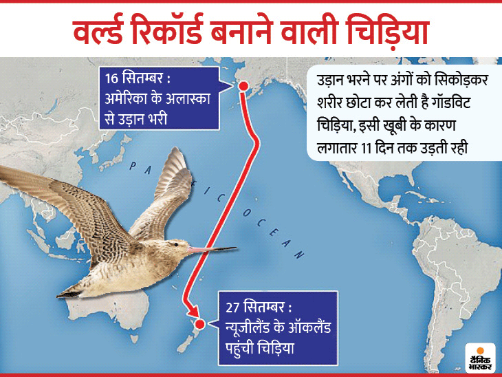 11 दिन में 12 हजार किमी. उड़कर वर्ल्ड रिकॉर्ड बनाने वाली चिड़िया, वैज्ञानिकों का दावा; इसका आकार लड़ाकू विमान जैसा और लंबे-नुकीले पंख हवा में तेज उड़ने की क्षमता देते हैं लाइफ & साइंस,Happy Life - Dainik Bhaskar