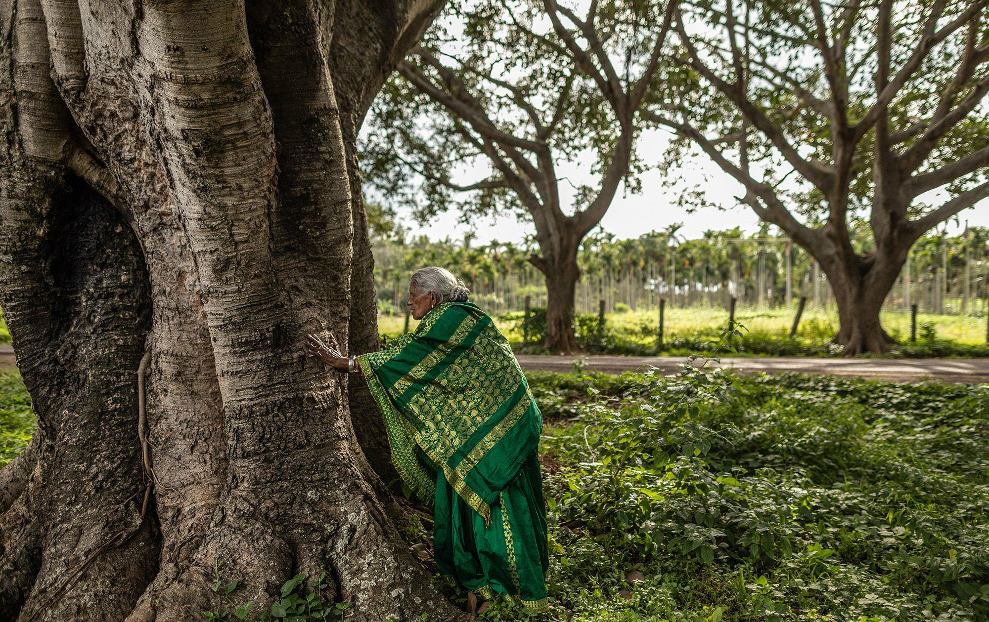 थिमक्का अब तक 8 हजार से ज्यादा पौधों को पालकर उन्हें पेड़ बना चुकी हैं।