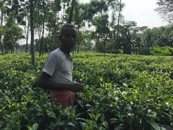 फैक्टरी मालिकों के साथ ही चाय उगाने वाले किसान भी मानते हैं कि सरकारी उदासीनता अगर दूर हो तो बिहार के सीमांचल क्षेत्र की स्थिति में काफी सुधार हो सकता है।