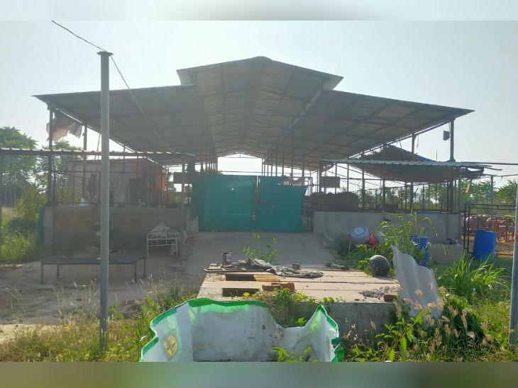 हरेश पटेल ऑर्गेनिक खेती भी करते हैं। खेती में गो-मूत्र और गोबर का उपयोग करते हैं। इससे न सिर्फ केमिकल खाद खरीदने का खर्च ही बचता है, बल्कि इससे जमीन भी उर्वरा रहती है।
