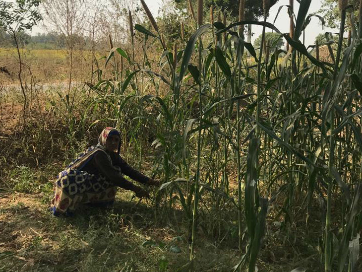 The women of the village also work in the fields along with the men.