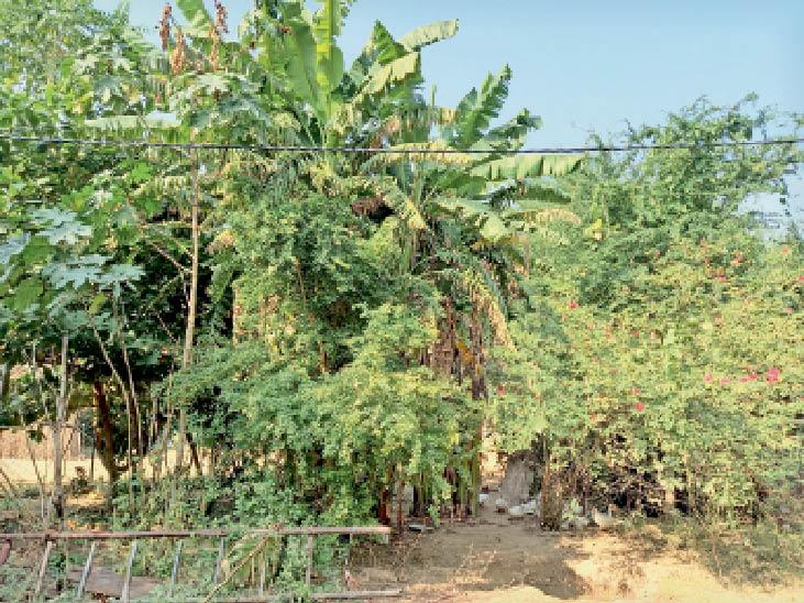 धोरों में 15 साल की मेहनत से 40 बीघा जमीन में 30 से अधिक प्रजाति के फल व छायादार पेड़ों का बगीचा किया विकसित बाड़मेर,Barmer - Dainik Bhaskar
