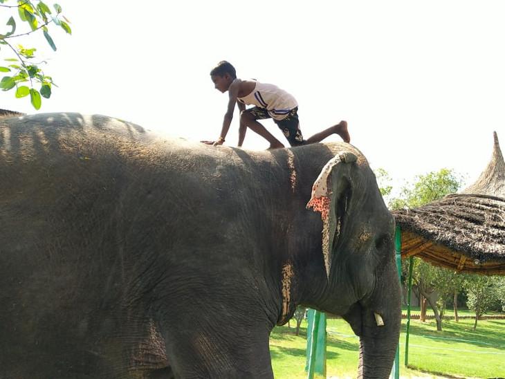 यहां हाथियों के रहने के लिए 63 शेड होम बने हुए हैं।