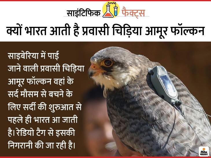 एक साल में 33 हजार किमी. का चक्कर लगाकर लौटी चिड़िया, अब इन्हें रेडियो टैग से बचाने की तैयारी; जानिए कैसे लाइफ & साइंस,Happy Life - Dainik Bhaskar