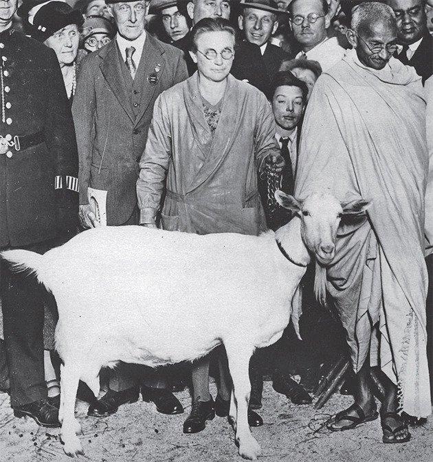 यह तस्वीर 5 दिसंबर 1931 को लंदन में ली गई थी। लंदन दौरे में भी महात्मा गांधी के लिए दो बकरियों का इंतजाम किया गया था।