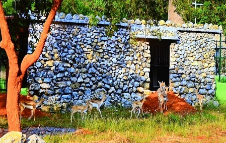 नवा रायपुर का जंगल सफारी छत्तीसगढ़ के प्रमुख पर्यटन स्थलों में शुमार है। - Dainik Bhaskar