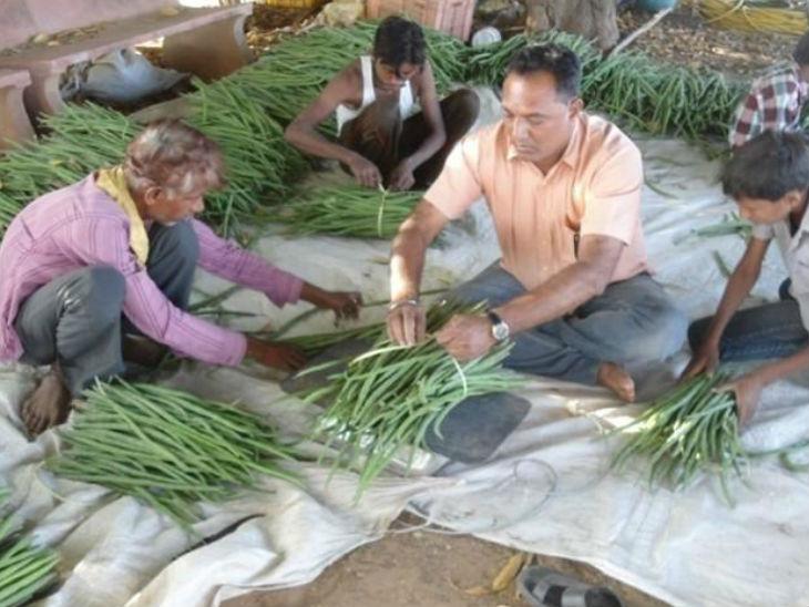 दीपेन के इस काम से 100 से ज्यादा लोगों को रोजगार मिला है। ये लोग पत्तियों और फलियों को तोड़ने से लेकर उन्हें पाउडर तैयार करने में दीपेन की मदद करते हैं।