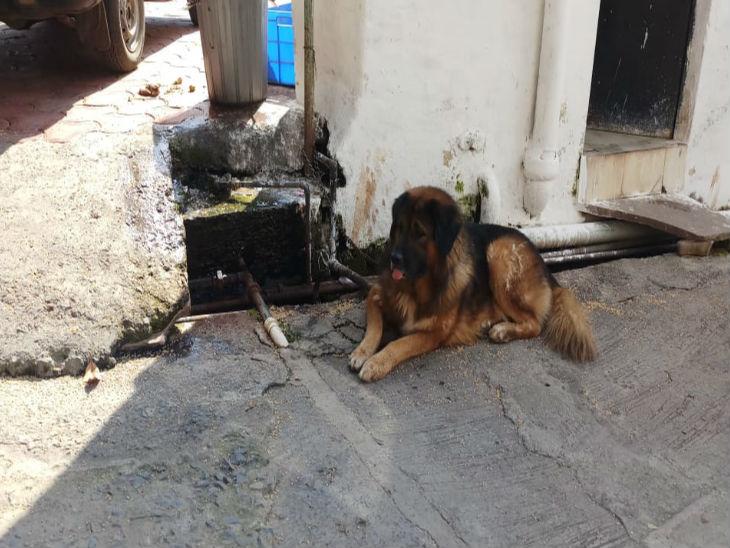 पांच विदेशी नस्ल के कुत्तों में शामिल एक