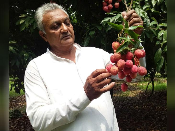 गन्ने की खेती में फायदा नहीं हुआ तो लीची और अमरूद की बागवानी शुरू की, सालाना 25 लाख रु. कमा रहे DB ओरिजिनल,DB Original - Dainik Bhaskar