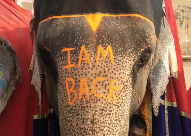 टूरिस्ट के स्वागत के लिए मारुति नाम के हाथी के माथे पर महावत ने लिख दिया- I am back