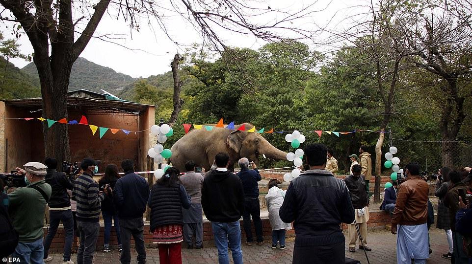 कावां के लिए 24 नवम्बर को फेयरवेल पार्टी रखी गई। यह एशिया में पहली बार जब किसी हाथी की विदाई के लिए पार्टी दी गई।