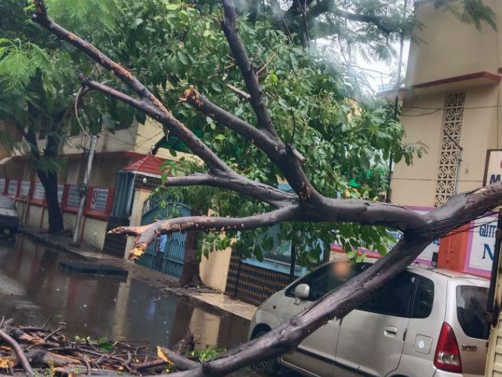 फोटो पुडुचेरी की है। वहां तेज हवाएं चलने की वजह से पेड़ गिर गए।