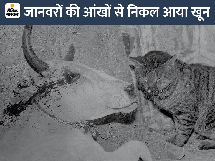 फैक्ट्री से पास में एक बिल्ली बैठी थी। गैस के कारण उसकी आंखों की रोशनी चली गई। थोड़ी देर बाद उसकी मौत हो गई। इसके अलावा एक गाय की आंखों से खून निकल आया।