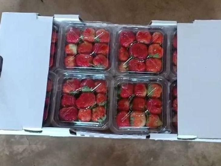 अभी शशिधर एक एकड़ जमीन से 30 टन से ज्यादा स्ट्रॉबेरी का प्रोडक्शन करते हैं।