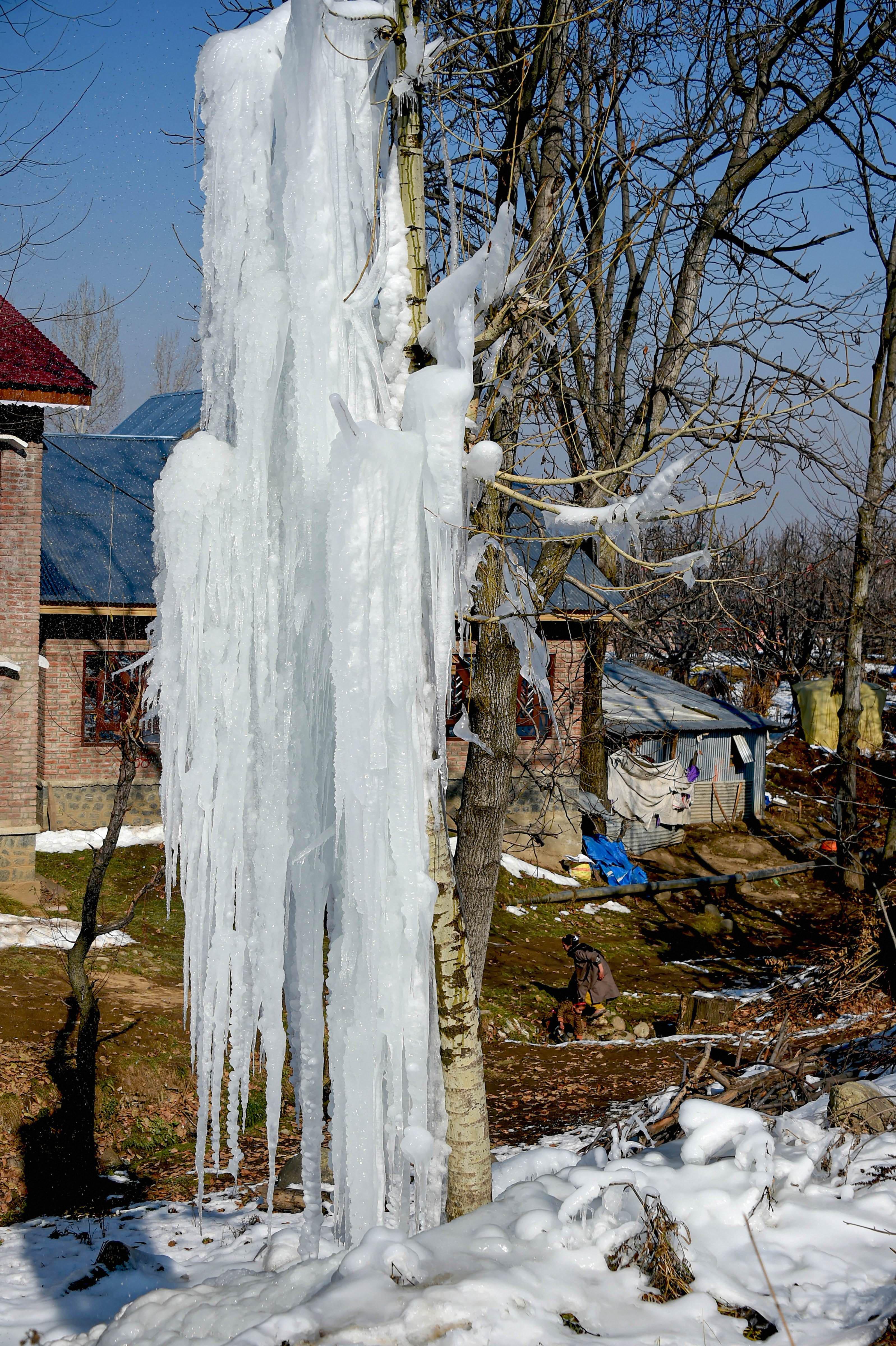 कश्मीर के शोपियां में पाइप लाइन फटने से निकला पानी पेड़ पर ही जम गया।