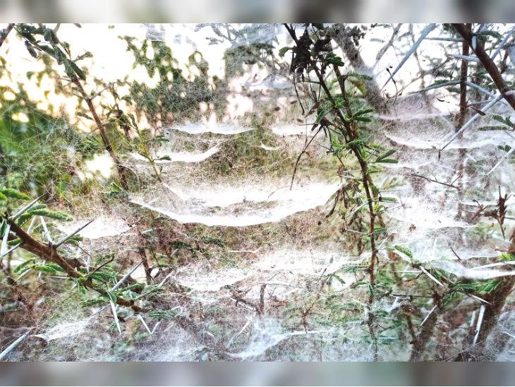 मध्य प्रदेश के बीना में ठंड के कारण पेड़ जमी बर्फ की चादर।
