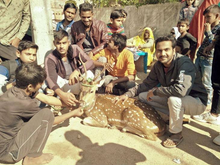 जंगल से भटककर गांव में पहुंचा हिरण कुएं में गिरा, ग्रामीणों ने रस्सी से बांधकर बाहर निकाला झांसी,Jhansi - Dainik Bhaskar