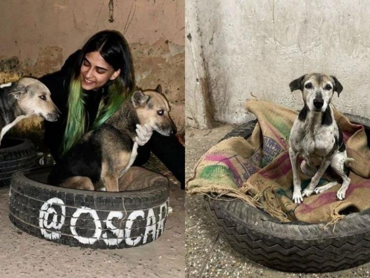 बेजुबन्स की सुरक्षा इनसे सीखें: दिल्ली की विभा तोमर ने पुराने टायरों से डॉग्स के लिए बिस्तर बनाया, सोशल मीडिया पर एक पोस्ट देखकर आया उन्हें मदद का नेक रखने