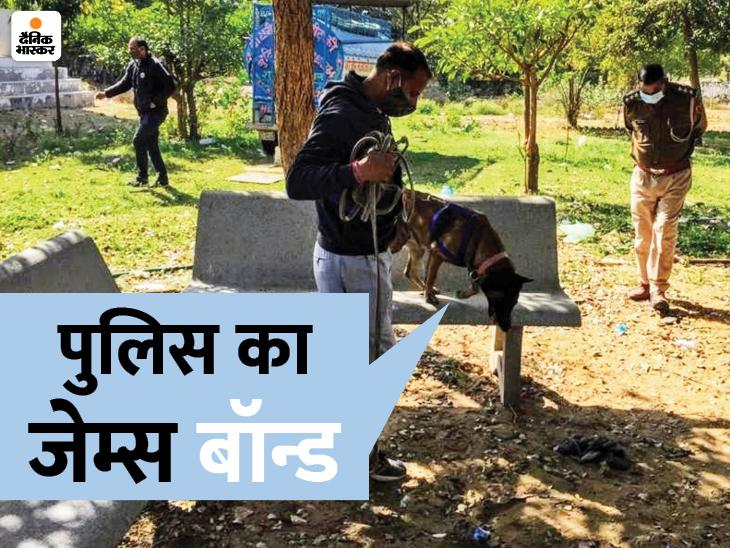 जयपुर में जहां हत्या हुई थी, वहां लाश को सूंघकर पुलिस को 2 किमी. दूर हत्यारे के घर तक पहुंचाया जयपुर,Jaipur - Dainik Bhaskar