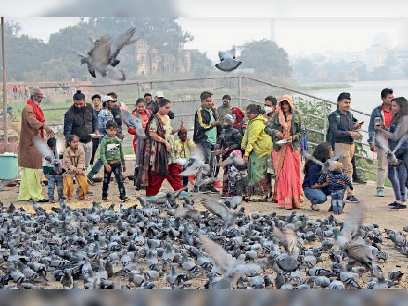 9 साल में 28 बार फैल चुका बर्ड फ्लू, देशभर में 74.30 लाख पक्षियों की हो चुकी मौत, प्रदेश में पहली बार हुई ये बीमारी कोटा,Kota - Dainik Bhaskar