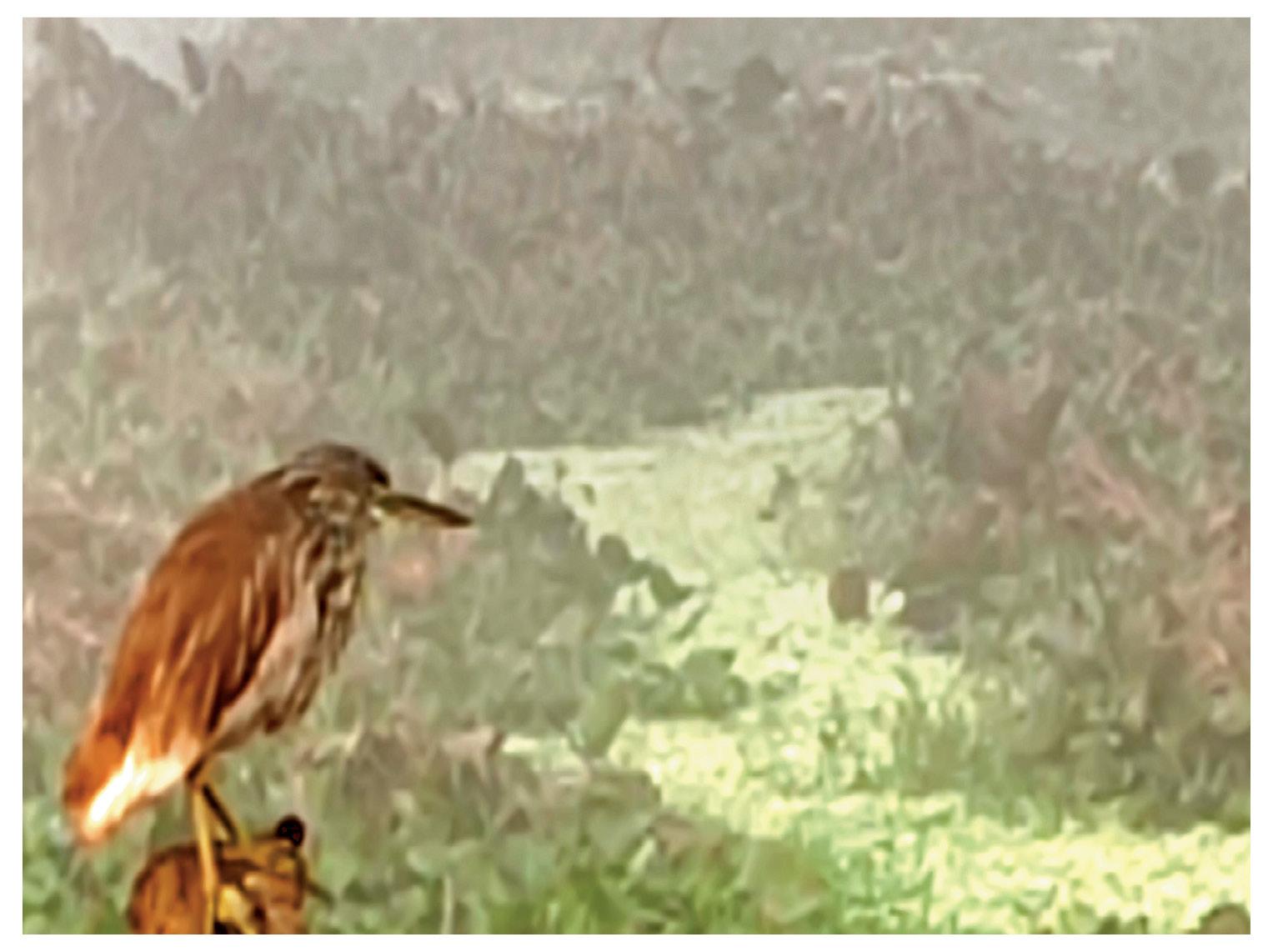 छत्तीसगढ़ के धमतरी में सुबह 6 बजे कोहरे के बीच बैठे पक्षी का चित्र।