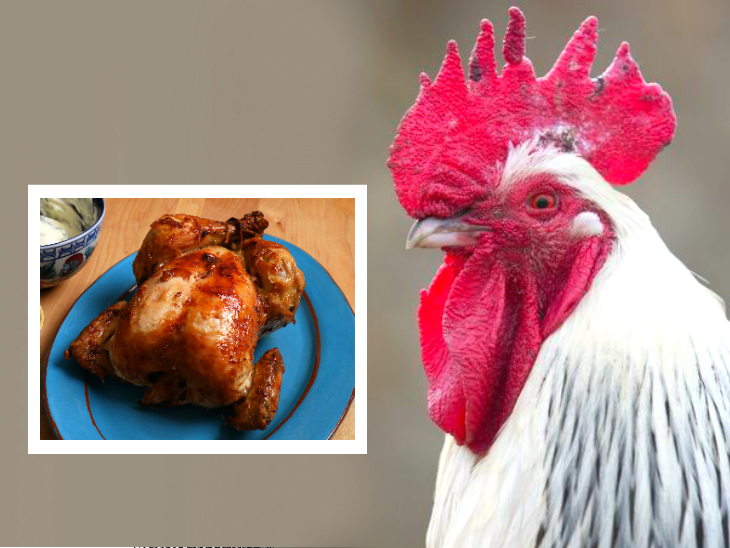 चिकन को 70 डिग्री पर पकाकर खाएं; कसाई घर और बीमार चिड़ियों के सम्पर्क में आए लोगों से दूरी बनाएं|लाइफ & साइंस,Happy Life - Dainik Bhaskar