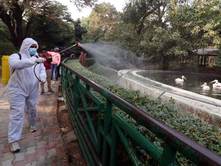 UP में भी संक्रमण की पुष्टि, दिल्ली समेत 3 राज्यों में जांच रिपोर्ट का इंतजार; देश में 1200 और पक्षी मरे