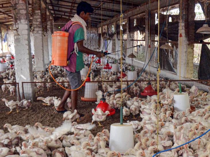 दिल्ली और महाराष्ट्र में भी संक्रमण की पुष्टि; कृषि मामलों की संसदीय समिति ने की बैठक