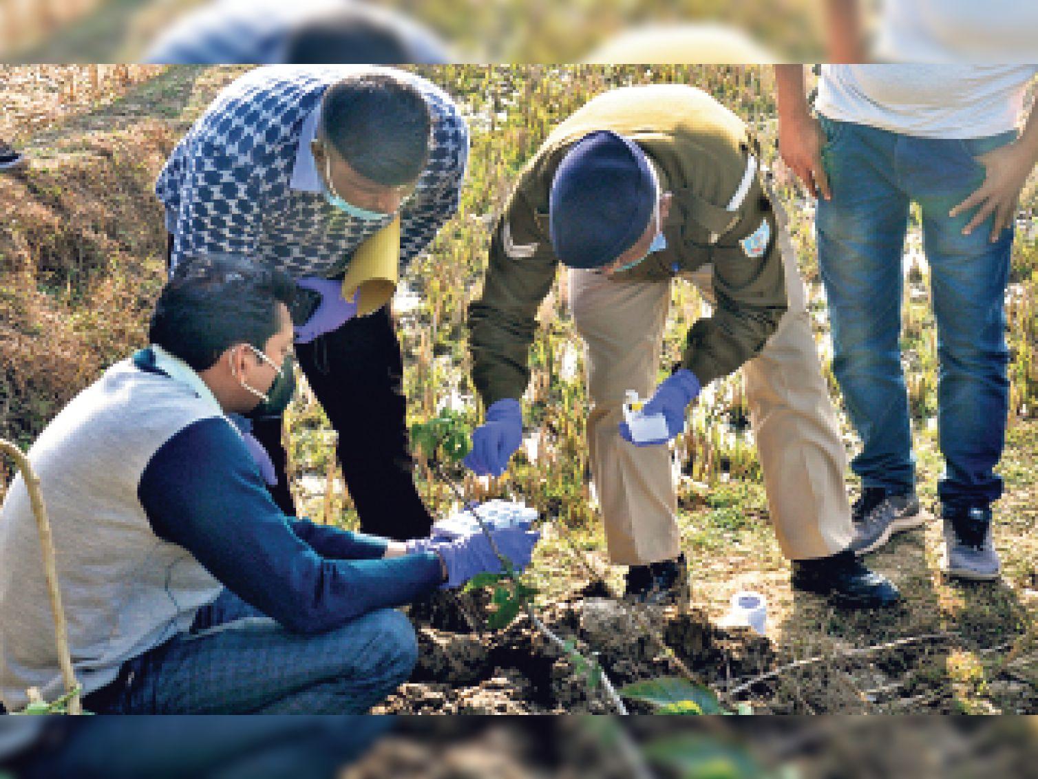 एसएफएल की टीम खेत पर पहुंची और जांच के लिए अवशेष और नमूना एकत्रित किया