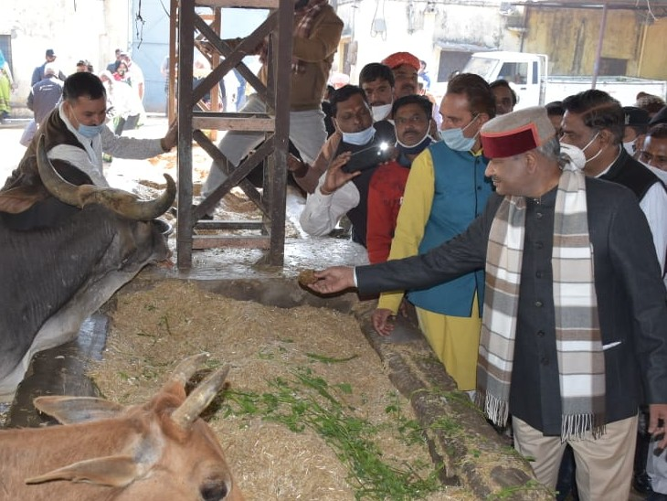 लोकसभा स्पीकर ओम बिरला ने भी गो शाळा पहुंचकर गायों को चारा डाला