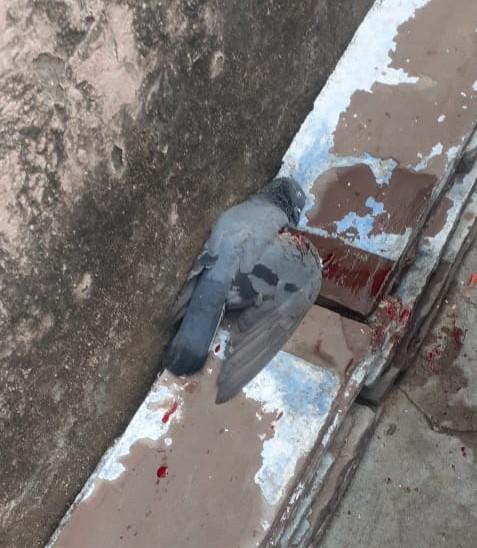 घायल हुआ पक्षी
