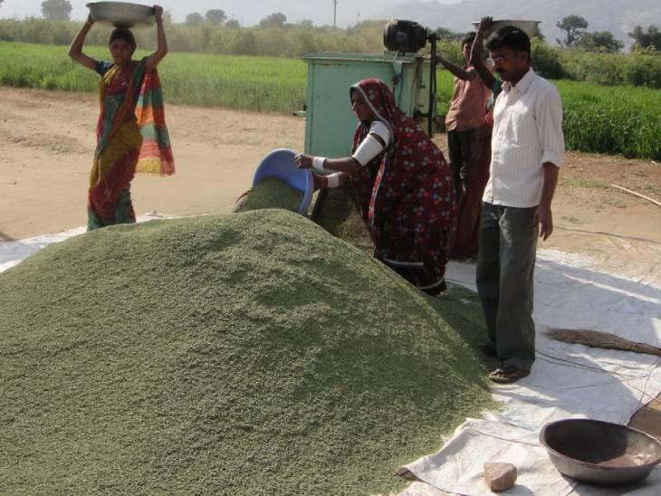 इशाक 15 एकड़ में सौंफ की खेती कर रहे हैं। इसकी एक फसल करीब 90 दिन में तैयार हो जाती है।